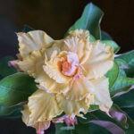 dsc04978 2 Мои цветы