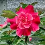 img 2639 Мои цветы