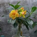 dsc04738 Мои цветы