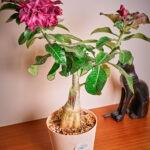 dsc04921 Мои цветы