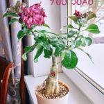 dsc04937 1 Мои цветы
