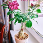 dsc04937 Мои цветы