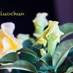 dsc04989 Мои цветы