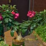dsc06508 Мои цветы