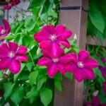 dsc06573 Мои цветы