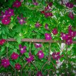 dsc06575 Мои цветы