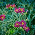 dsc06725 Мои цветы
