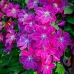 dsc06733 Мои цветы