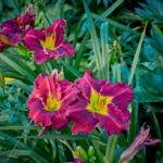 dsc06734 1 Мои цветы