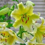 dsc06797 Мои цветы