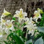 dsc06798 Мои цветы