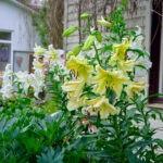dsc06799 Мои цветы