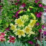 dsc06802 Мои цветы