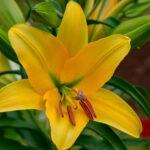 dsc06809 Мои цветы