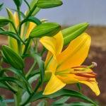 dsc06810 Мои цветы